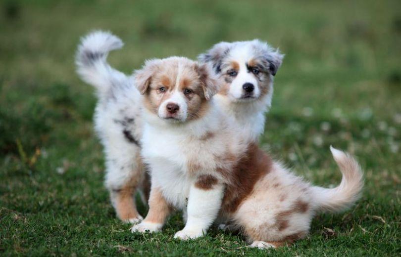 Відповідальність та турбота: зірки про своє ставлення до тварин